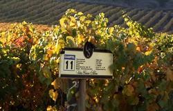 Casa Silva wijngaard 250x160