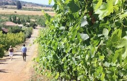 Dos camalidos winery 250x160
