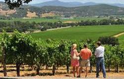 Les Sibles wijngaard 250x160