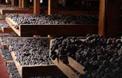 Selezione Fabiano drogen v druiven 250x160