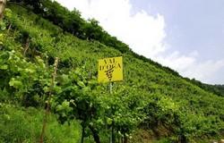 Val d'Oca wijngaard 250x160