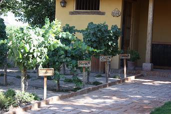 Wijnhuis In Situ