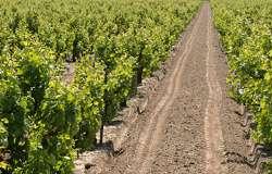 Brazin Winery 250x160