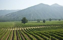 Casa Santiago winefield 250x160