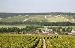 Champagne Moutard winery 250x160