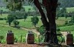 Conosur wijngaard 2 250x160