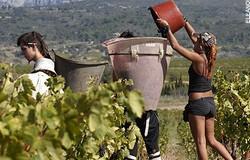 La Bastide wijnoogst 250x160
