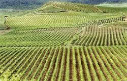 Medievo winery 250x160