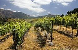 Toro d oro wijngaard 250x160