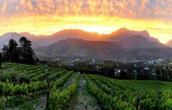 Withof winery250x160