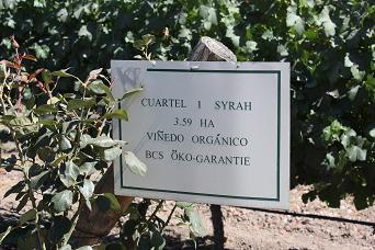 Wijnhuis in Situ2